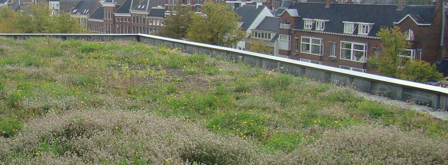 groene-daken